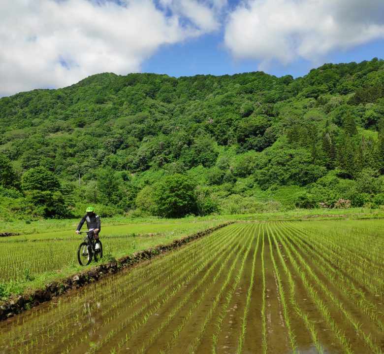 Mountain biking near japanese paddy field